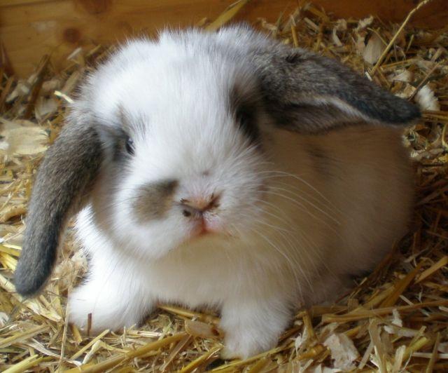 Kaninchen Abgeben Wohin